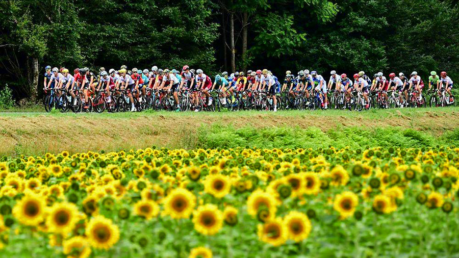 Sunflowers line the Tour de France